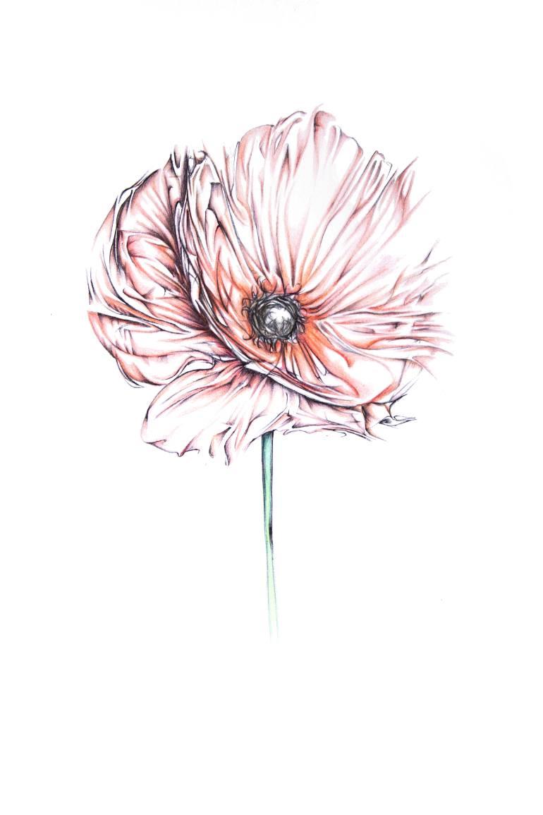 770x1155 Saatchi Art Abstract Poppy Flower Drawing By Hannah B Pedersen