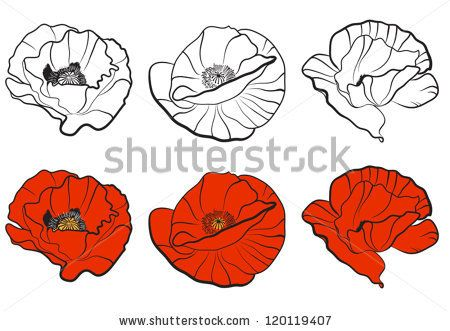 450x331 Three Different Bud Of Poppy. Template For Your Design By Oksana