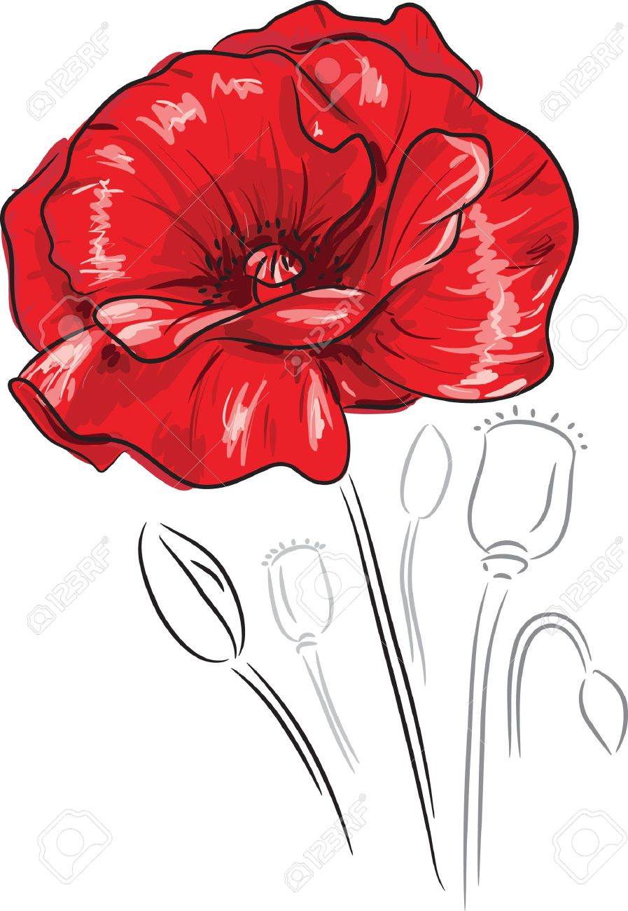 Poppy Flower Drawing at GetDrawings.com | Free for personal use ...