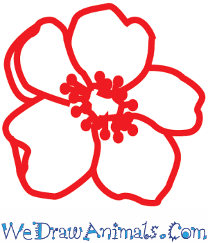 Poppy flowers drawing at getdrawings free for personal use 300x350 how to draw a poppy flower mightylinksfo