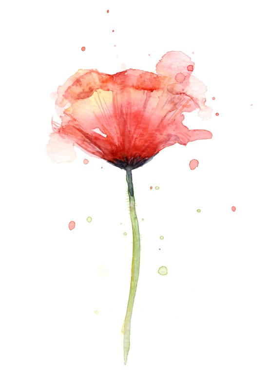 550x805 Red Poppy Watercolor Floral Illustrationby Olechka Tatoo