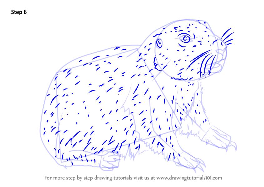 846x600 Step By Step How To Draw A Baby Prairie Dog