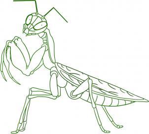 302x272 Mantiss Calendar Praying Mantis, Animal Drawings