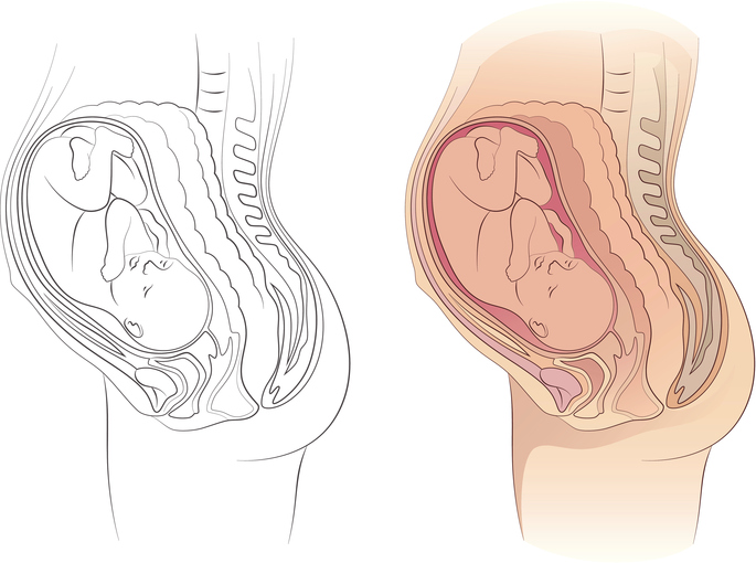 685x510 Organs Getting Squashed During Pregnancy Mom365