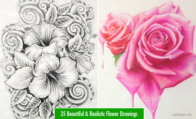 Pretty flowers drawing at getdrawings free for personal use 660x400 40 beautiful flower drawings and realistic color pencil drawings mightylinksfo