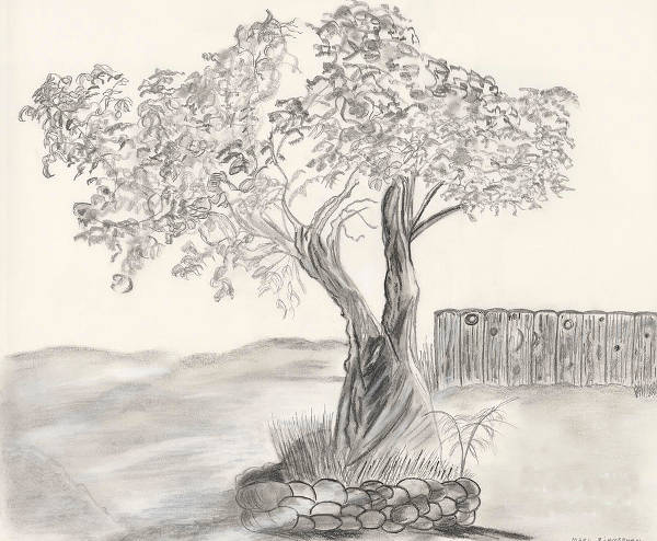 pretty tree drawing at getdrawings com free for personal use