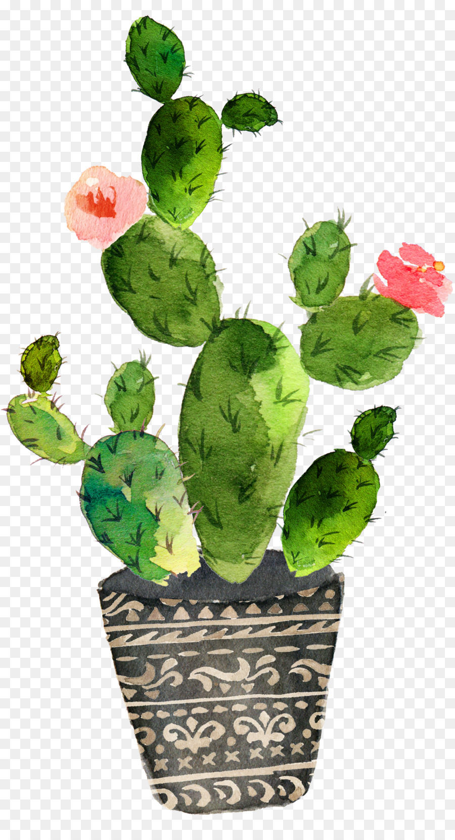 900x1660 Cactaceae Watercolor Painting Art Drawing
