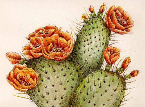 500x370 Prickly Pear Cactus Drawing Prickly Pear Cactus 2004 Watercolor
