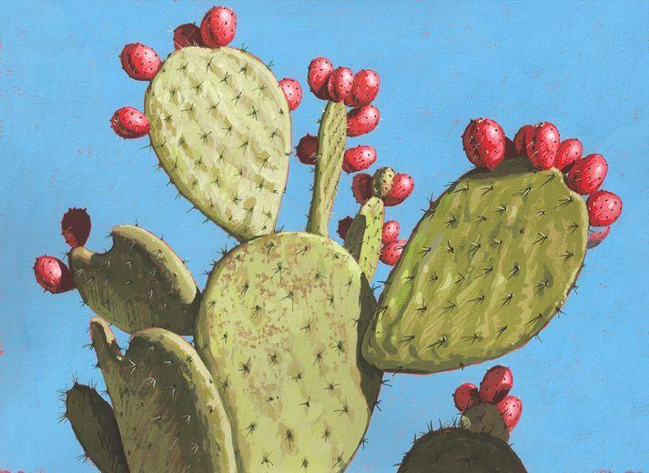 713x520 Prickly Pear Cactus
