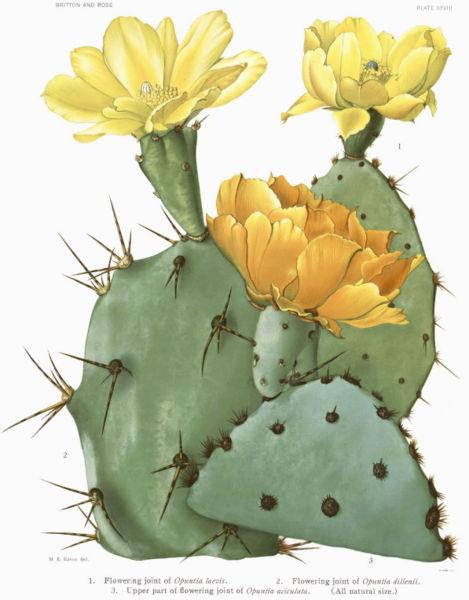 469x600 Desert Cactus Poster, Cactus Print, Yellow Cactus Blossom