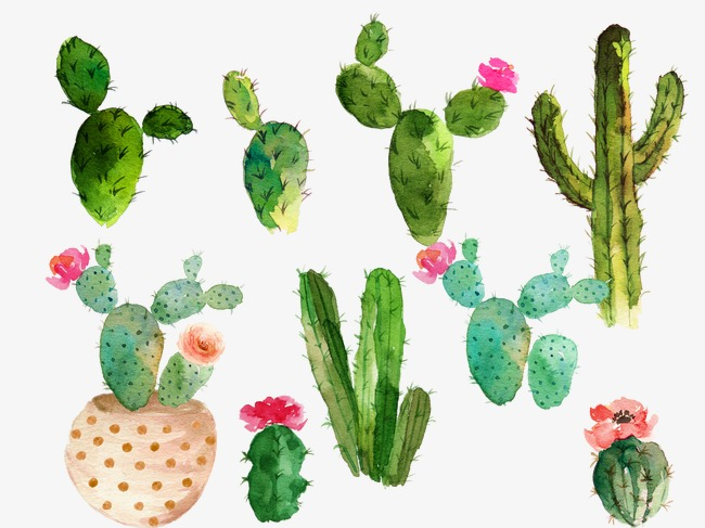 prickly pear drawing at getdrawingscom free for