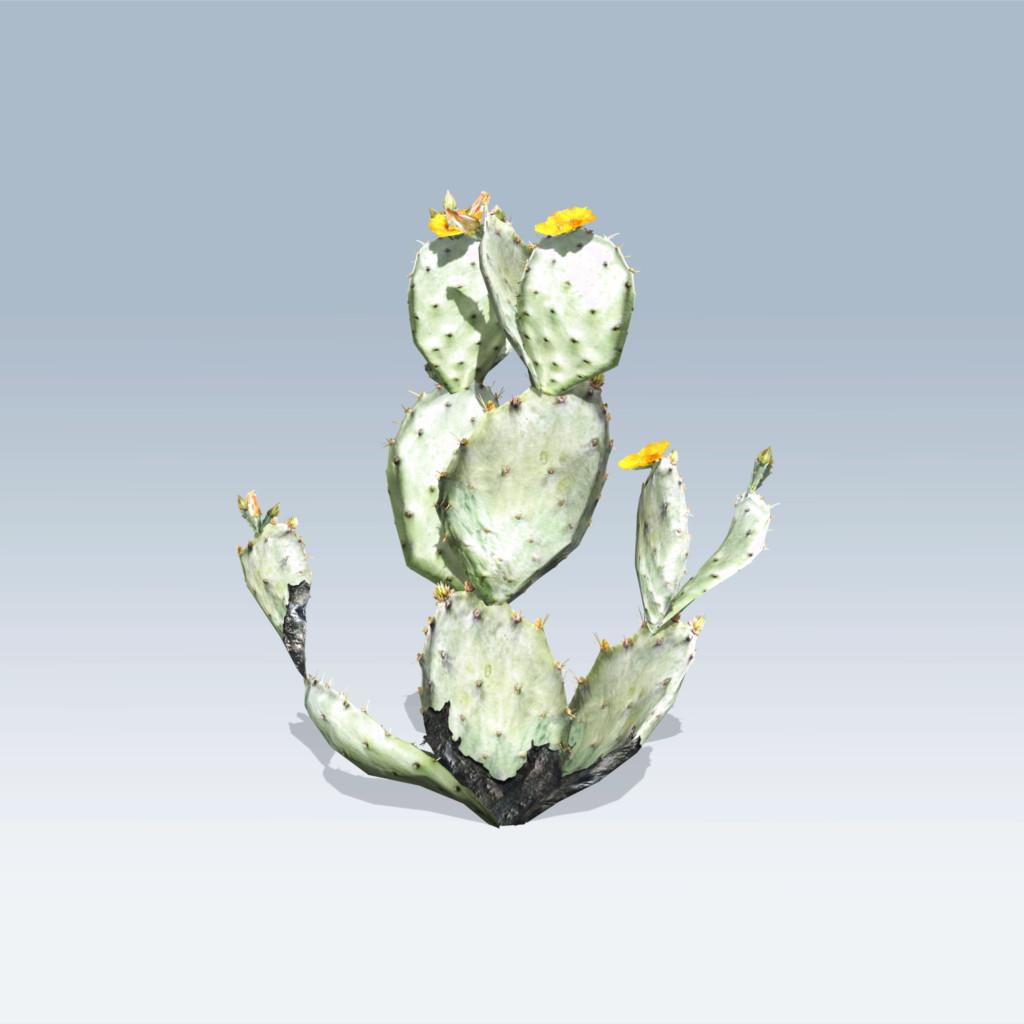 1024x1024 Prickly Pear Cactus (V6)