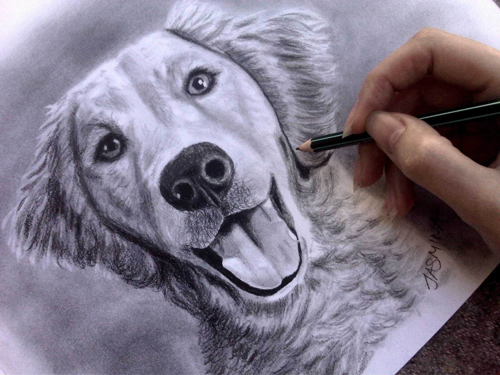 2048x1536 Speed Drawing Dog