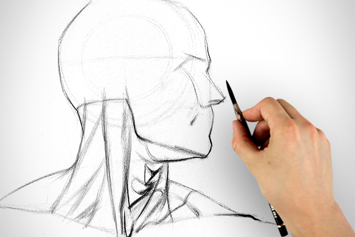 720x480 Learn To Draw The Neck