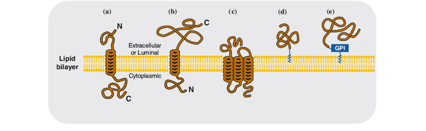 850x261 Schematic Drawing Showing The Following Five Types Of Membrane