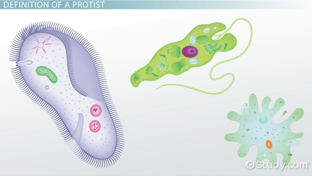 1024x578 3 Methods Of Protist Locomotion