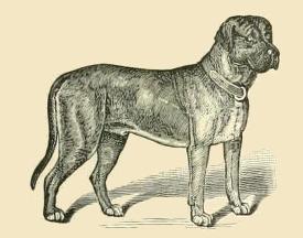 275x216 Public Domain Dog Drawing
