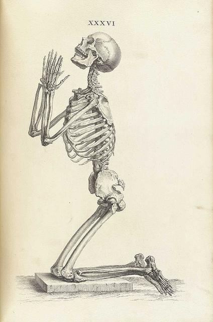 424x640 William Cheselden's Osteographia (1733) The Public Domain Review