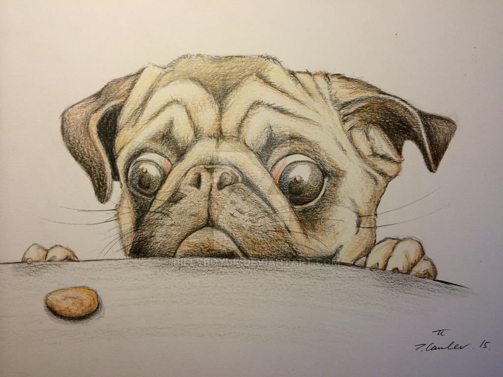 1024x768 Hungry Pug Dog Pencil Drawing By Billyboyuk