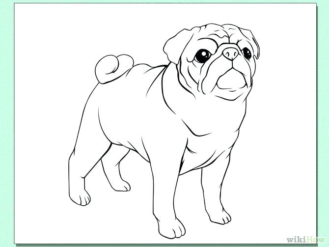 670x503 Pug Coloring Pages Full Size Of Coloring How To Draw A Pug Dog