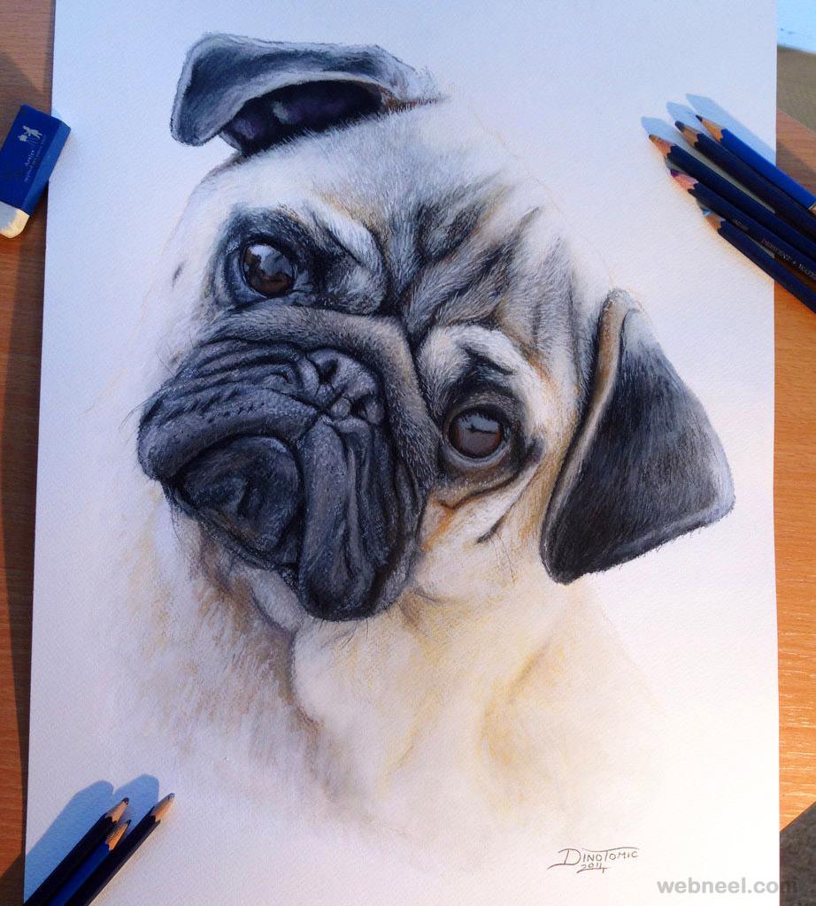 922x1024 Pug Dog Drawing Dinotomic 22