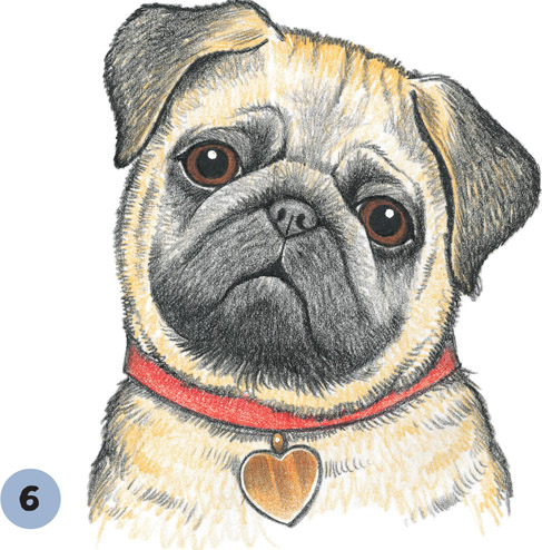 487x494 Pug Puppy