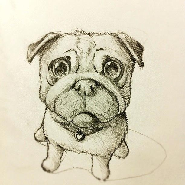612x612 Cute Puppy Sketches Drawn Pug Puppy 5 Easy Cute Puppy Sketches