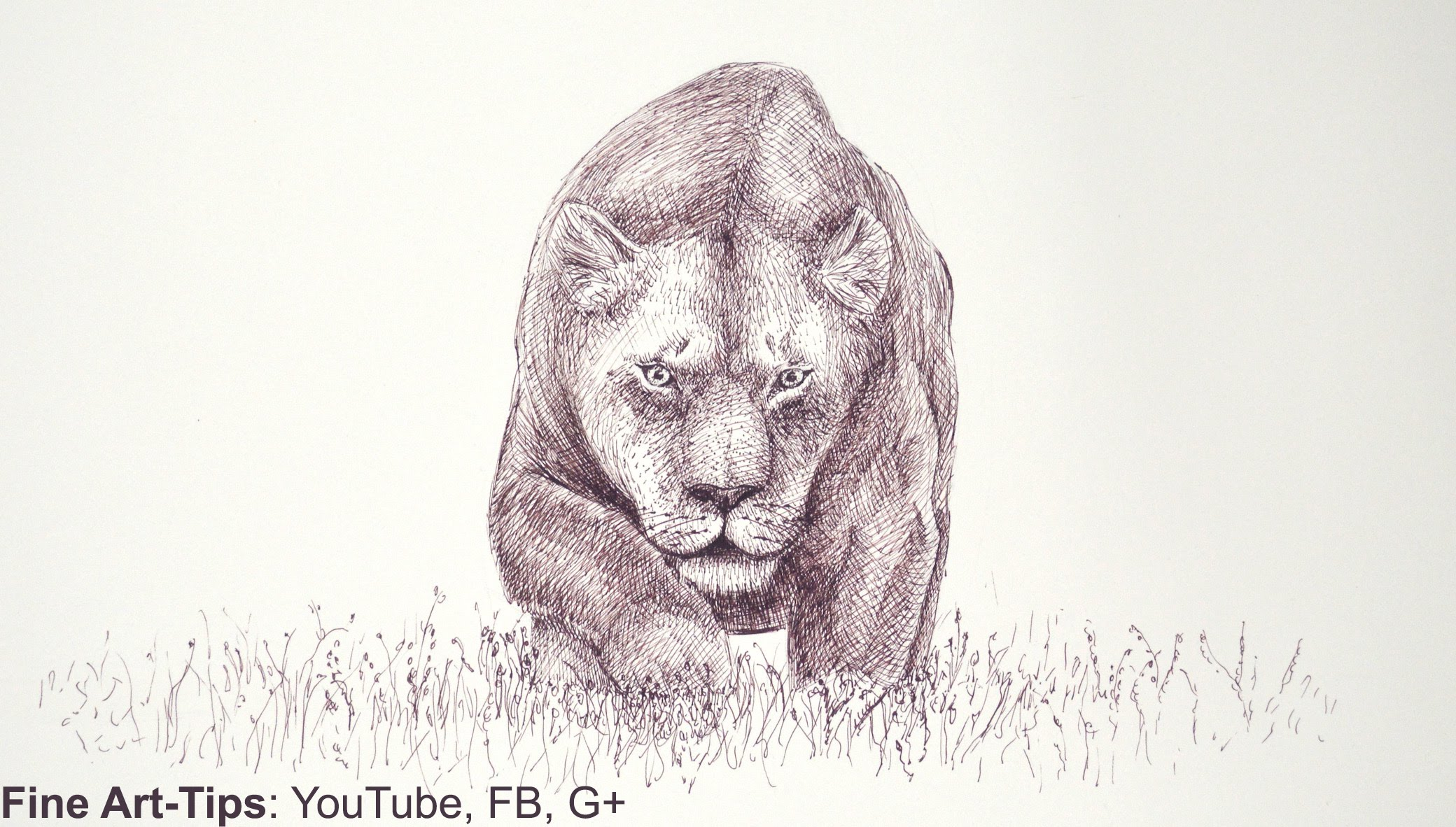 2080x1182 How To Draw Draw A Lioness With A Marker