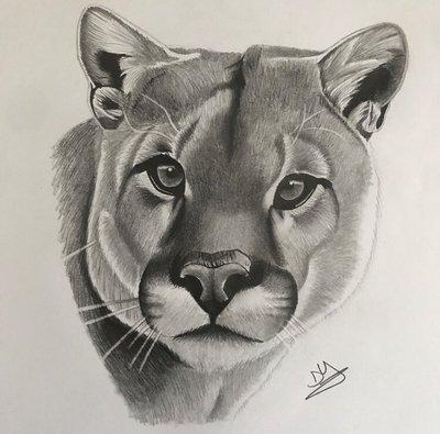 400x395 Puma Drawing By Artbydeshaun