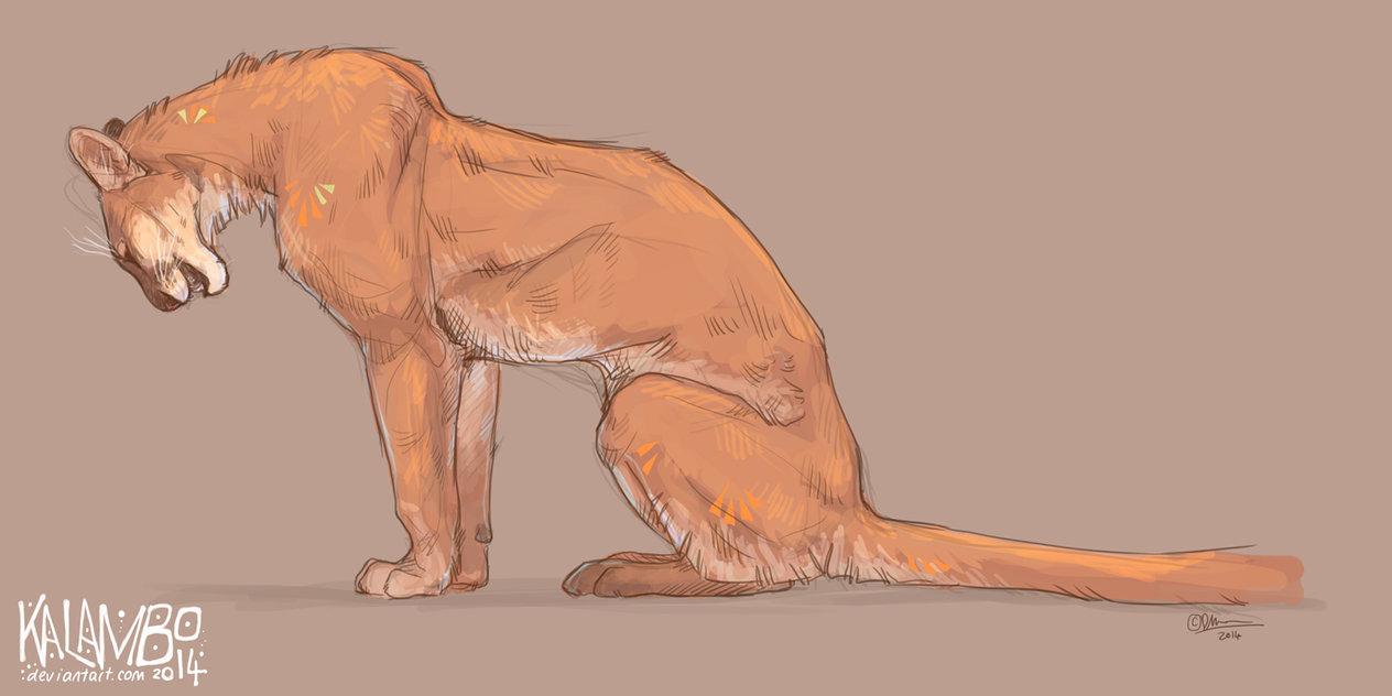 1264x632 Puma By Kalambo