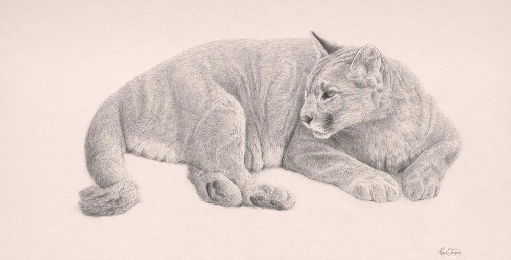 1000x510 Renso Tamse Wildlife Artwork