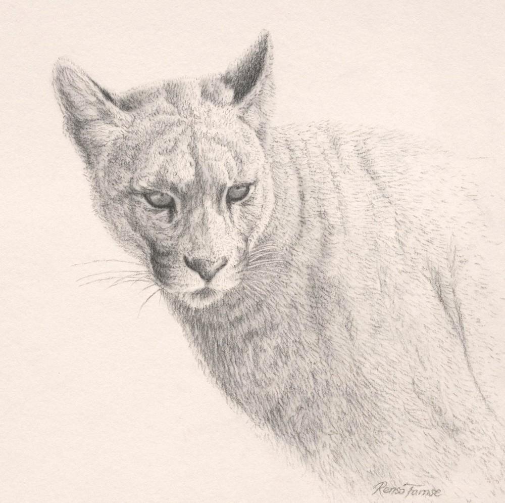 1000x995 Renso Tamse Wildlife Artwork