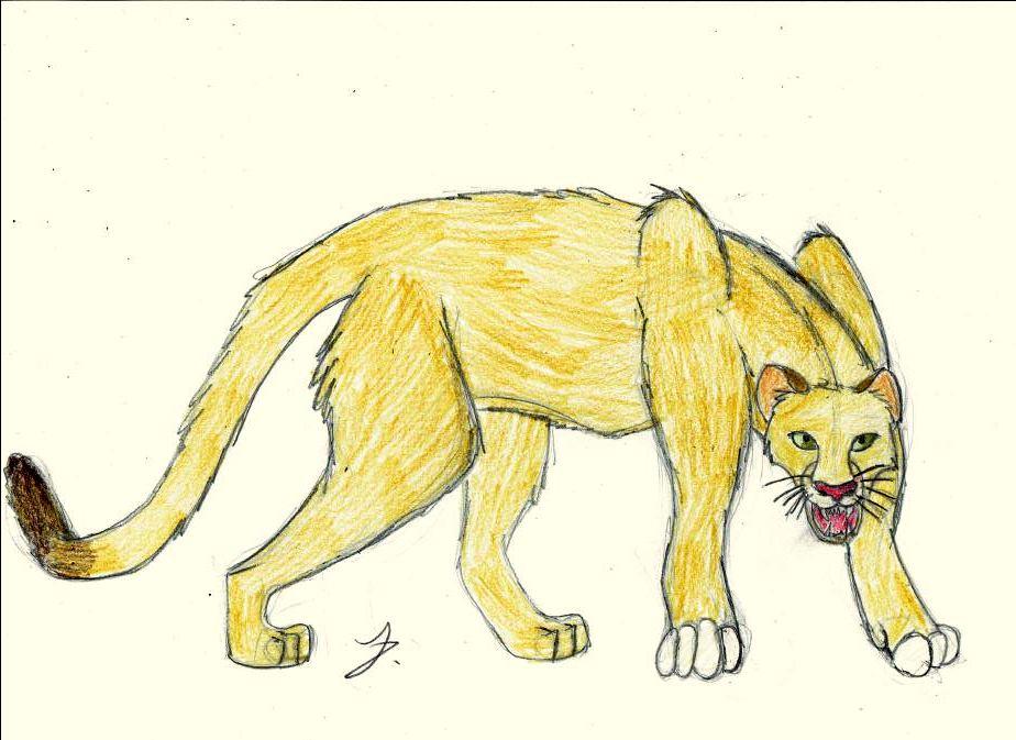 924x673 Cougar Puma Drawing By Hydrona