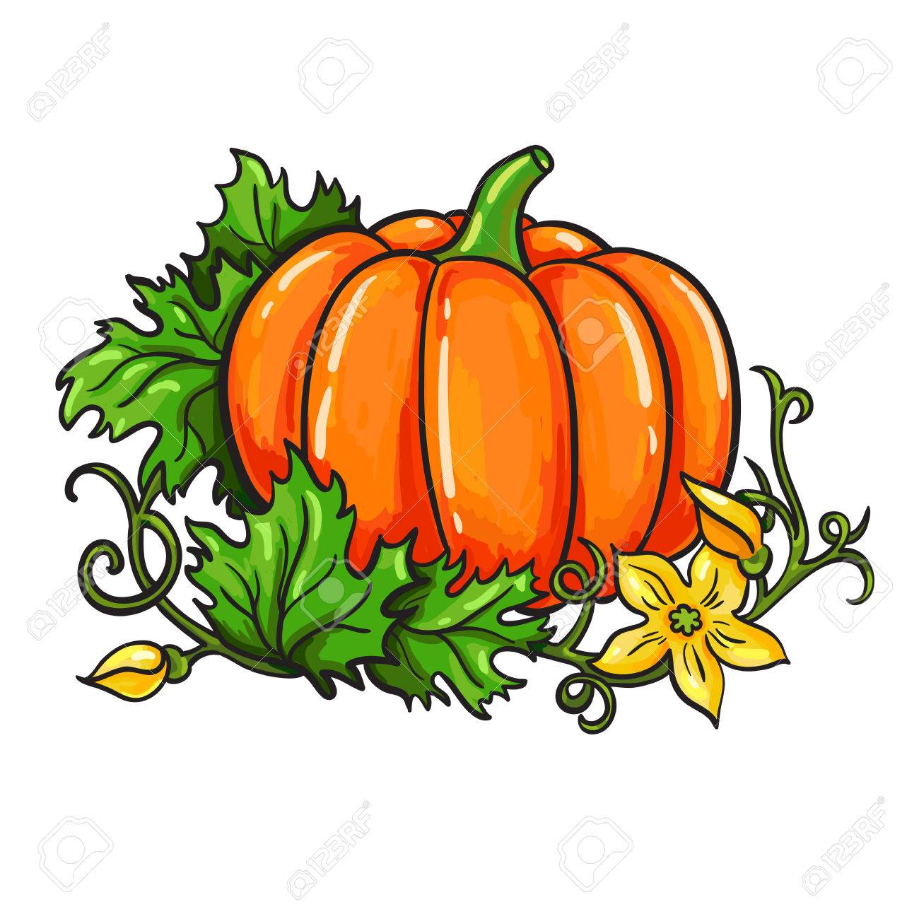 Pumpkin Drawing at GetDrawings.com | Free for personal use ...