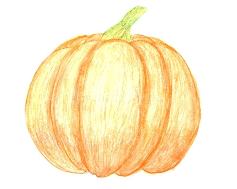 800x637 Pumpkin Drawing Vector Hand Drawn Pumpkins And Leaves Autumn