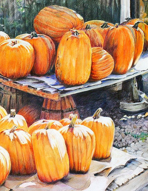 570x735 Pumpkin Drawing Reproductionorange Realistic By Lauraprill On Etsy