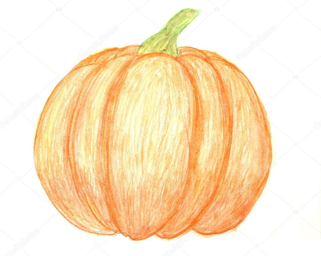 1023x815 Pumpkin Drawing Stock Photo Studiobarcelona