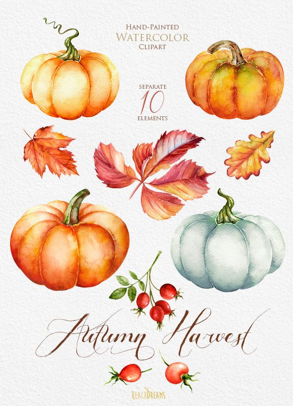576x800 Pumpkin Watercolor Clipart Halloween Autumn Briar Reachdreams