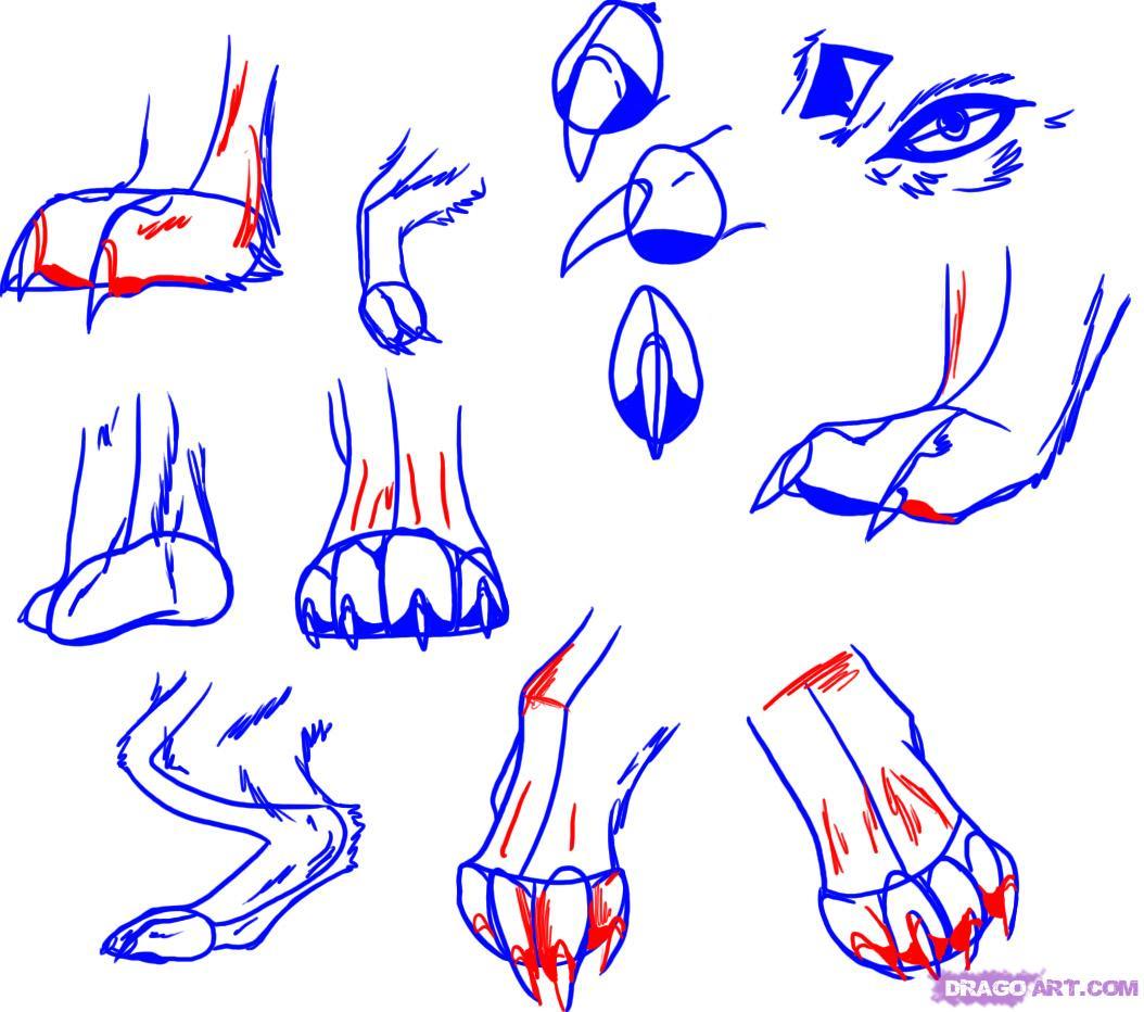 1054x932 Drawing Of A Dog Paw Drawn Puppy Paw Print