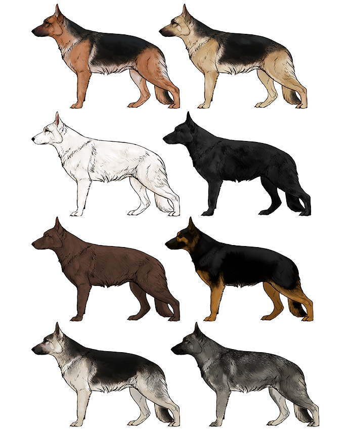 700x863 How To Draw A Dog Details Make The Difference