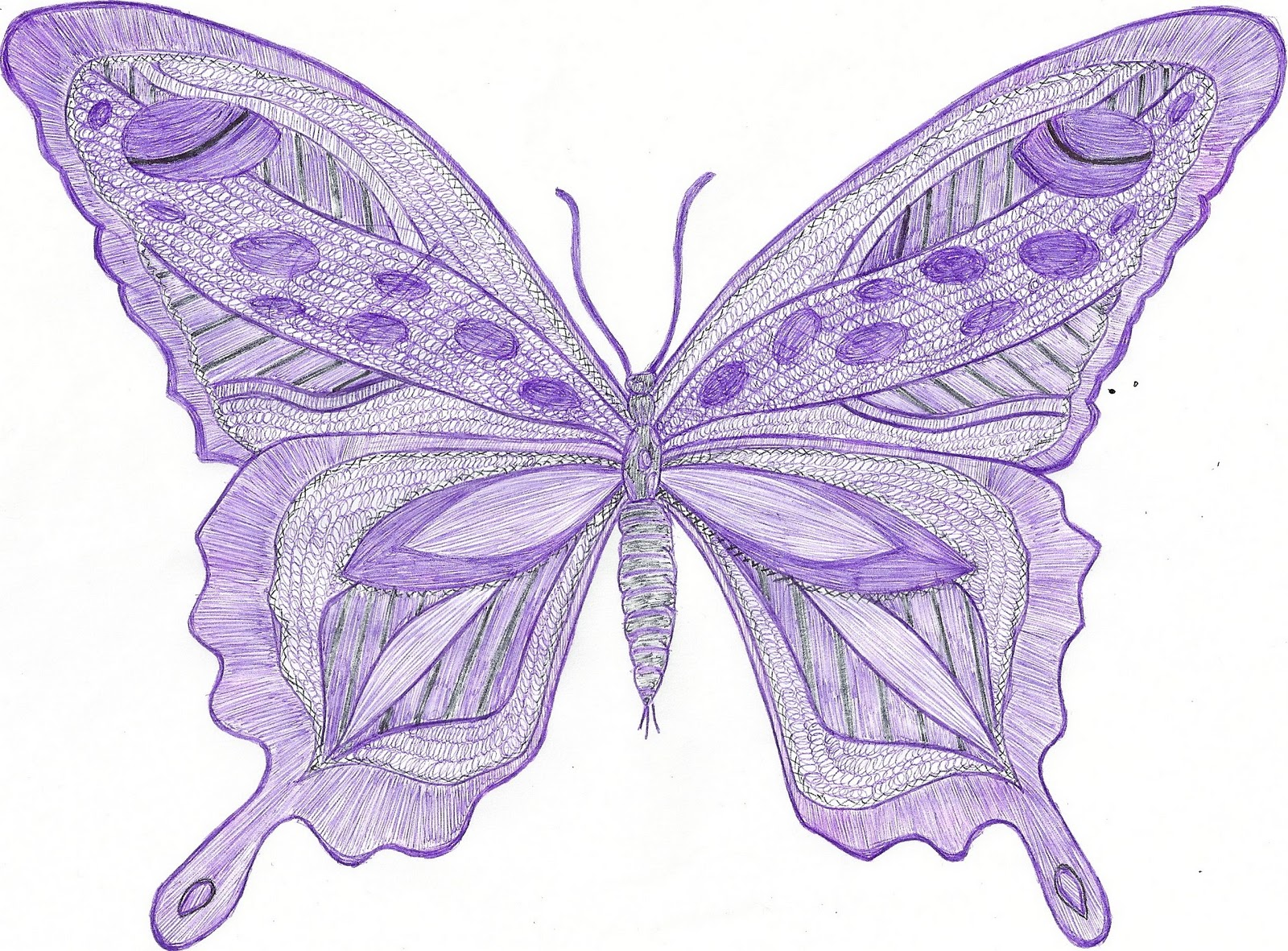 1600x1181 Great Purple Butterfly Drawing Wallpaper Purple Background