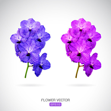368x368 Vector Purple Flower Drawing Free Vector Download (98,534 Free