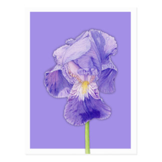 324x324 Colour Pencil Drawing Cards, Photocards, Invitations Amp More