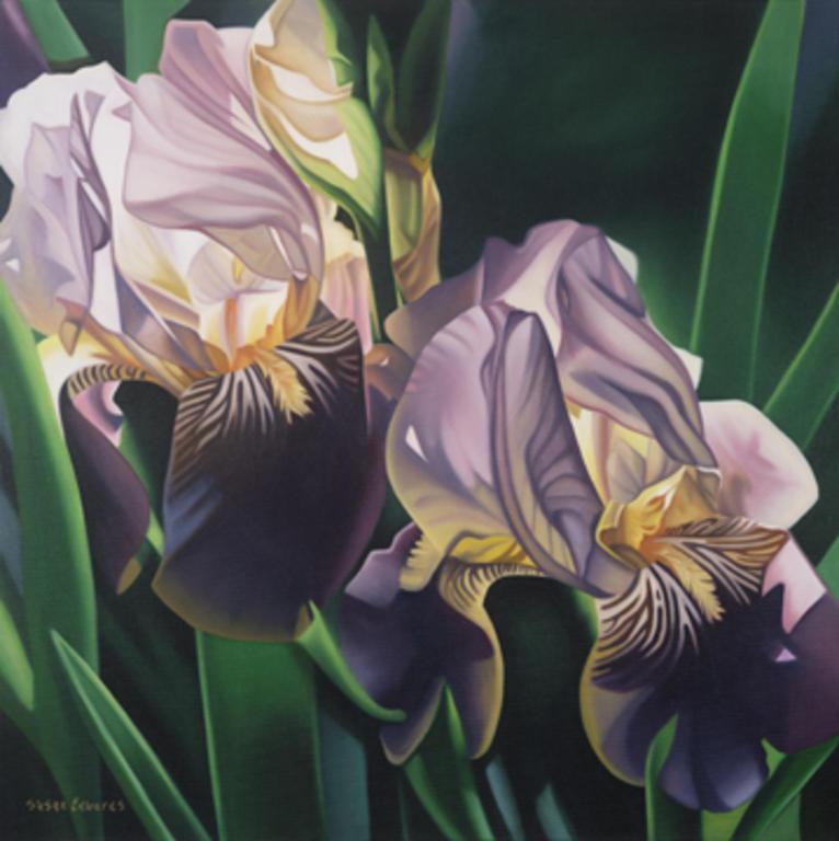 766x768 Purple Iris By Susan Landino Edwards Drawing