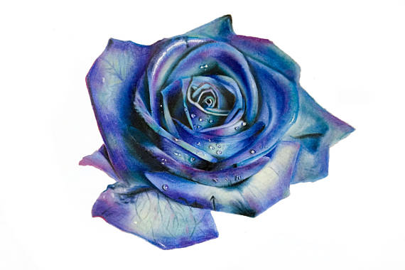 570x380 Blue Green And Purple Rose Drawing Print Wall Art Flower