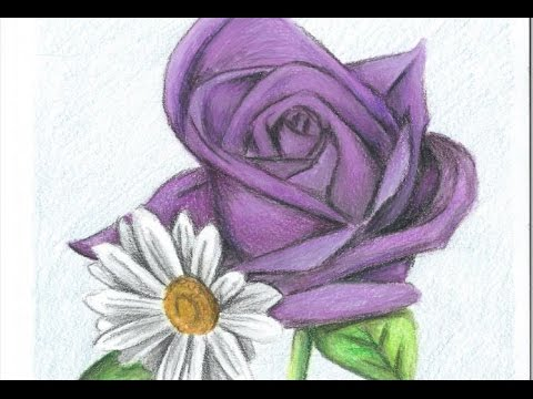 480x360 Drawing A Purple Rose And Daisies