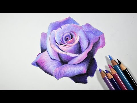 480x360 How To Draw A Lavender Rose