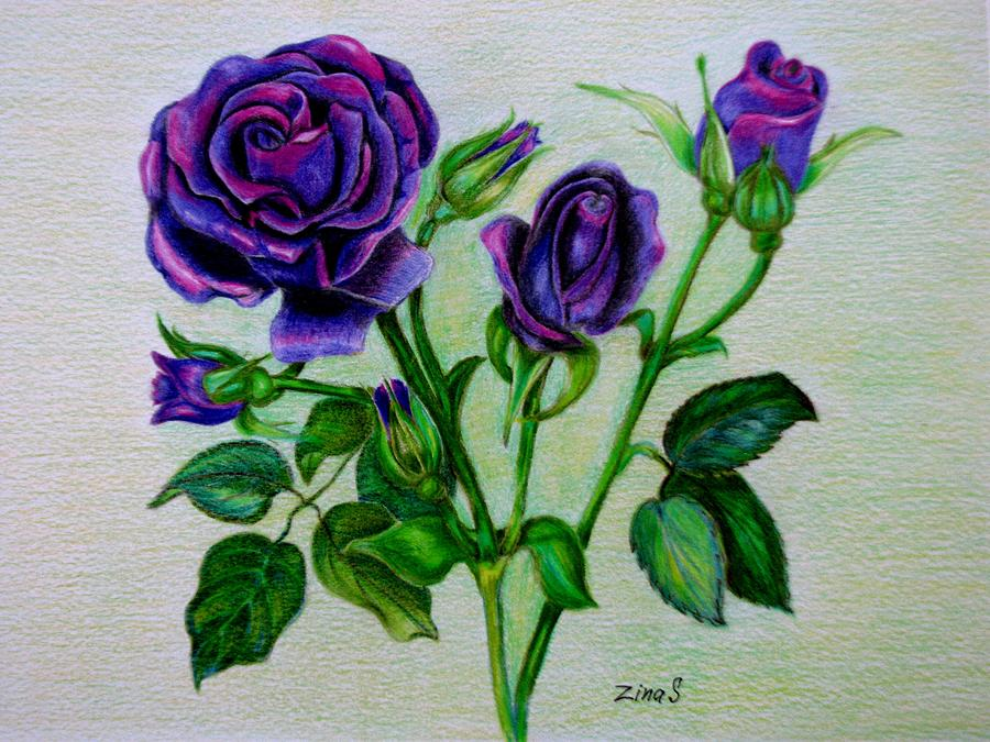 900x675 Purple Roses Drawing By Zina Stromberg