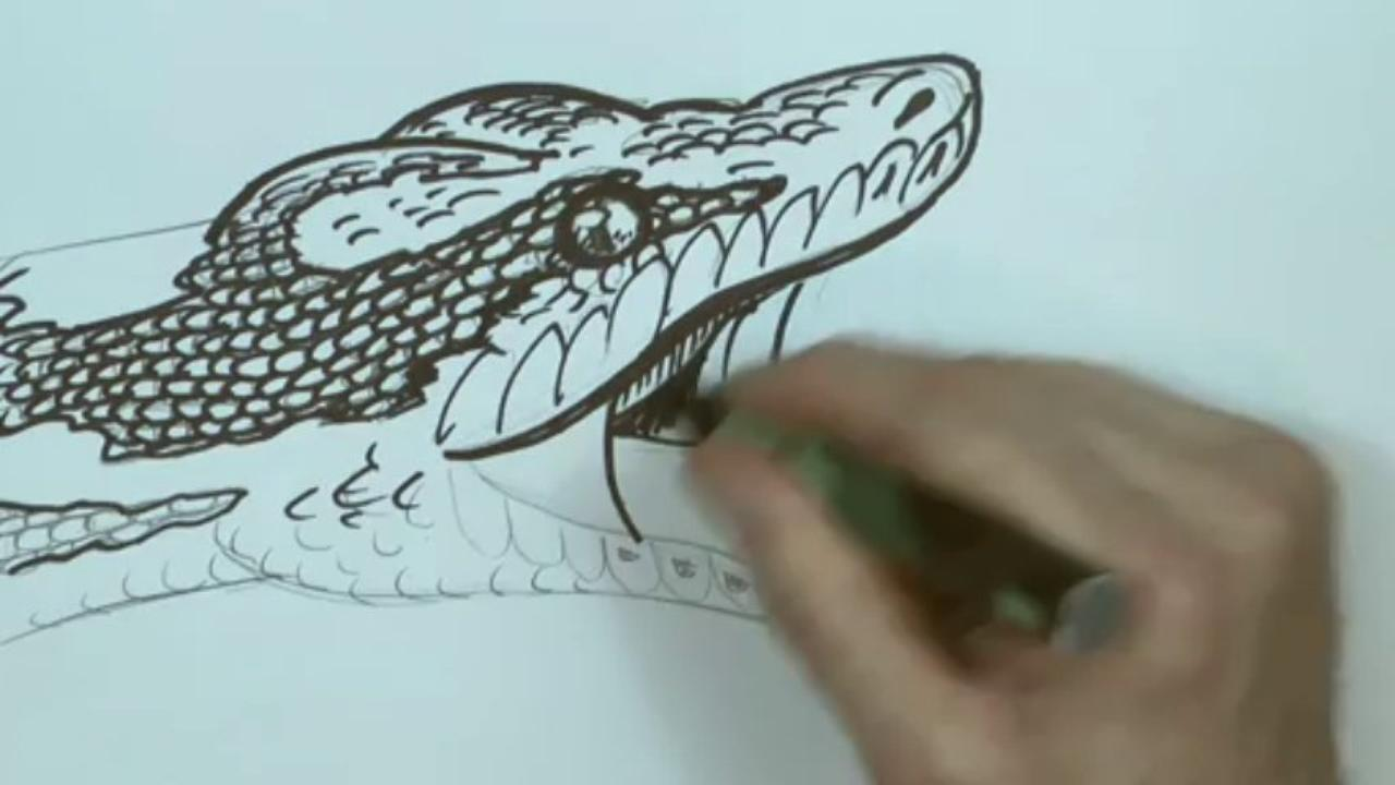 1280x720 How To Draw A Snake