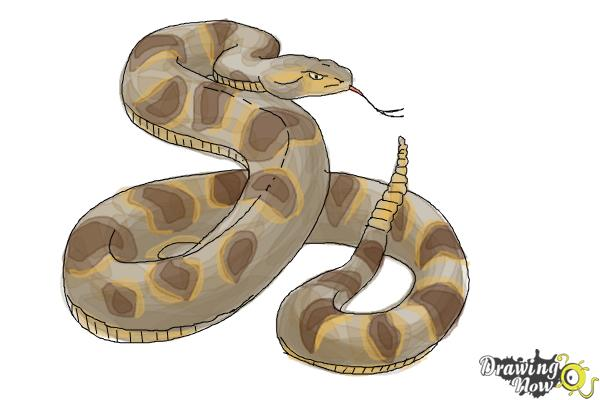 600x400 How To Draw A Realistic Snake